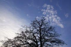 Träd och himmel Fotografering för Bildbyråer