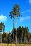 Träd och himmel Royaltyfria Bilder