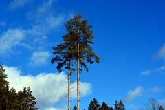Träd och himmel Arkivfoto