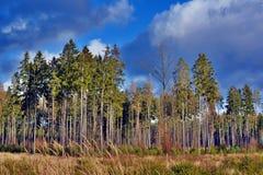 Träd och himmel Arkivbild