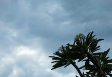 Träd och himmel efter regn och mulet royaltyfri foto