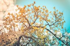 Träd och himmel i bygd royaltyfri fotografi
