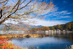 Träd och himmel i höst fotografering för bildbyråer