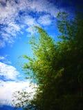 Träd och himmel i Malaysia royaltyfria foton