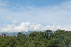 Träd och himmel som så är härliga, version 14 fotografering för bildbyråer