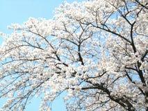 Träd- och himmelblomma Fotografering för Bildbyråer