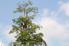 Träd- och himmelsiktsbakgrund royaltyfria foton