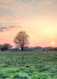 Träd och inställningssolen Royaltyfri Foto