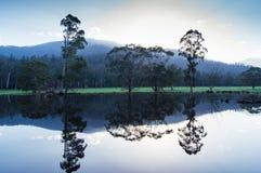 Träd och kullar reflekterade i en sjö nära Marysville, Australien Royaltyfri Foto