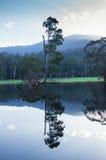 Träd och kullar reflekterade i en sjö nära Marysville, Australien Arkivbild