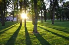 Träd och långa skuggor Arkivfoton