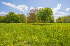 Träd och lösa blommor i ett fält i vår arkivfoton