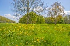 Träd och lösa blommor i ett fält i vår royaltyfria foton