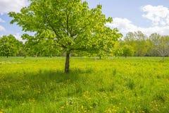 Träd och lösa blommor i ett fält i vår arkivfoto