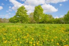 Träd och lösa blommor i ett fält i vår royaltyfria bilder