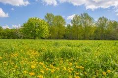 Träd och lösa blommor i ett fält i vår arkivbilder