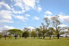 Träd och landskap Arkivbilder