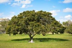 Träd och landskap Arkivbild