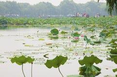 Träd och landskap i parkBotanical trädgård i Hangzhou Royaltyfri Fotografi