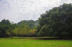 Träd och landskap i parkBotanical trädgård i Hangzhou Arkivbild
