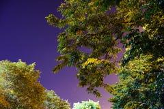 Träd och liten stjärna på natten Royaltyfria Bilder