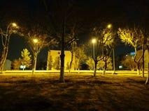 Träd och ljus arkivbild
