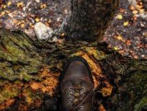 Träd och lopp arkivbilder