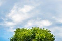 Träd och louds på blå himmel royaltyfri bild