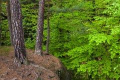 Träd och med ett avbrott i skogen arkivbilder