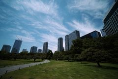 Träd och metropolis royaltyfri foto