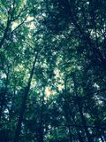 Träd och mig Royaltyfria Foton