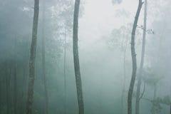 Träd och mist i skog Royaltyfri Fotografi