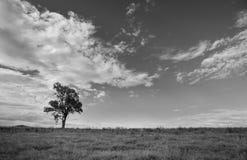 Träd och moln Royaltyfria Bilder