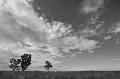 Träd och moln Royaltyfria Foton