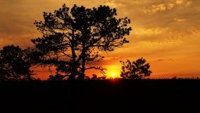 Träd och moln på solnedgången Arkivfoto
