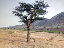 Träd och montering av cg Arkivbilder