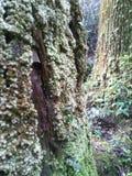Träd och mossa Arkivfoton