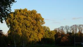 Träd och natur i eftermiddagsolen Arkivfoto