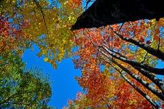 Träd och nedgångsidor i Smokiesen Arkivfoto