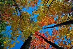 Träd och nedgångsidor i Smokiesen Royaltyfria Foton