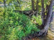 Träd och ogräs vid kanten av sjön arkivfoton