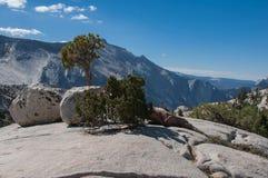 Träd och is- oregelbundna stenblock i Yosemite Royaltyfri Foto