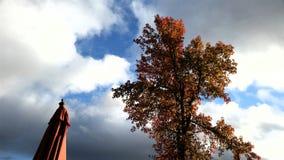 Träd och paraply Arkivbild