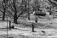 Träd och propanbehållare efter lös brand royaltyfria foton