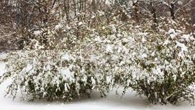 Träd och prydnader Fotografering för Bildbyråer
