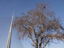 Träd och pylon Royaltyfri Fotografi