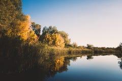 Träd och rotting runt om sjön arkivbild