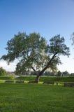 Träd och rytm av bänkar Arkivbild