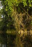 Träd och sidor längs en flod Fotografering för Bildbyråer