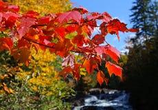 Träd och sidor på indisk sommar, Quebec, Kanada Arkivbilder